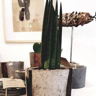 Pots et succulentes
